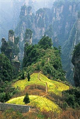 """张家界国家森林公园    张家界国家森林公园是我国第一座被定为"""""""