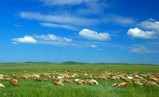 com-内蒙古大草原夏季旅游节庆活动众多