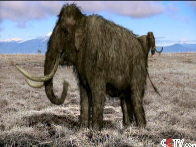 灭绝动物猛犸象