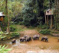 中国-西双版纳野象